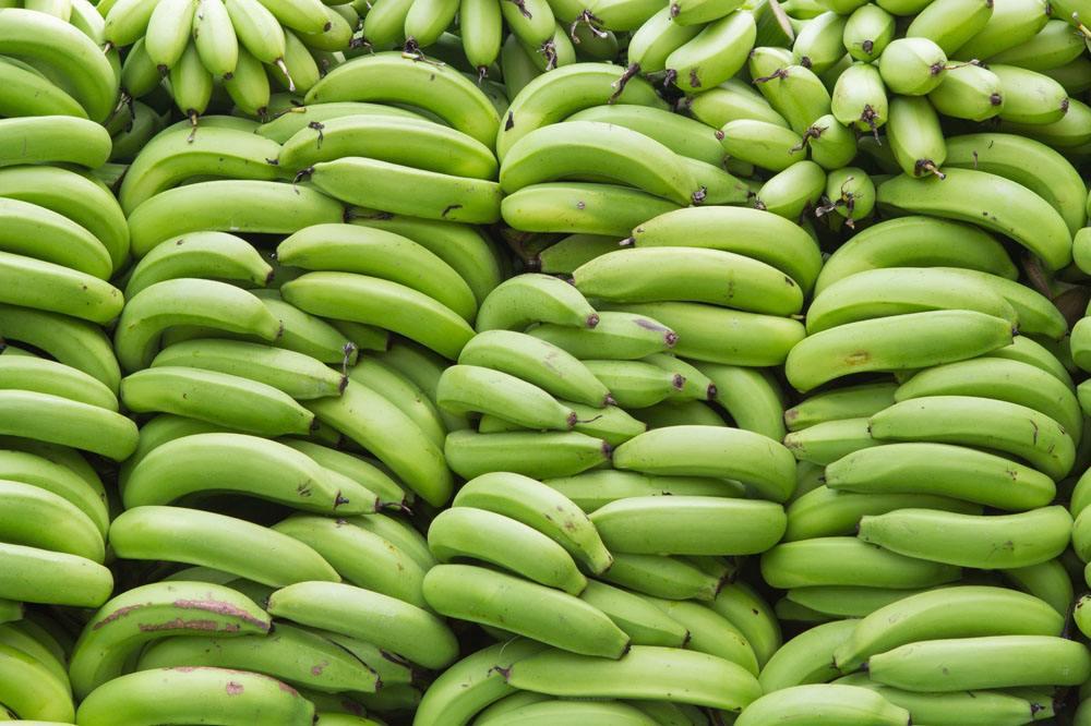 厄瓜多尔香蕉进口报关